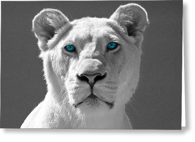 Blue Eyes Greeting Card by Scott Carruthers