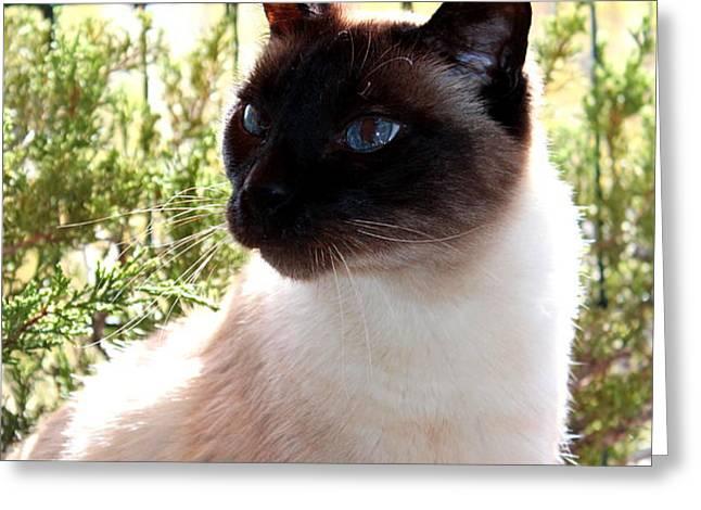 Blue Eyes Greeting Card by Sonja Bonitto