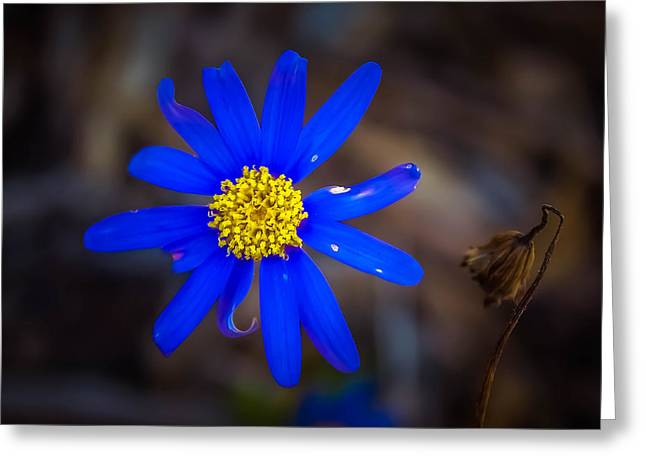 Michelle Greeting Cards - Blue Flower Greeting Card by Michelle Saraswati