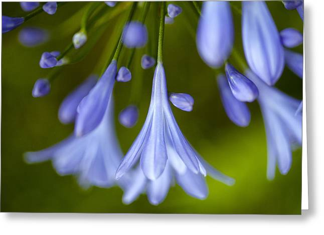 Pastel Green Greeting Cards - Blue Flowers Greeting Card by Nailia Schwarz