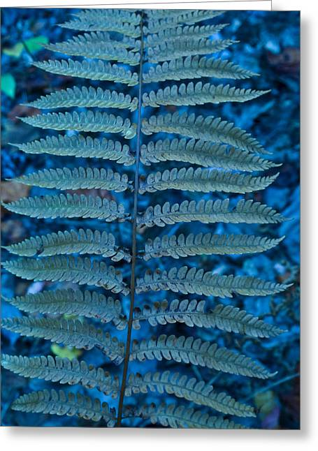 Blue Frond Greeting Card by Douglas Barnett