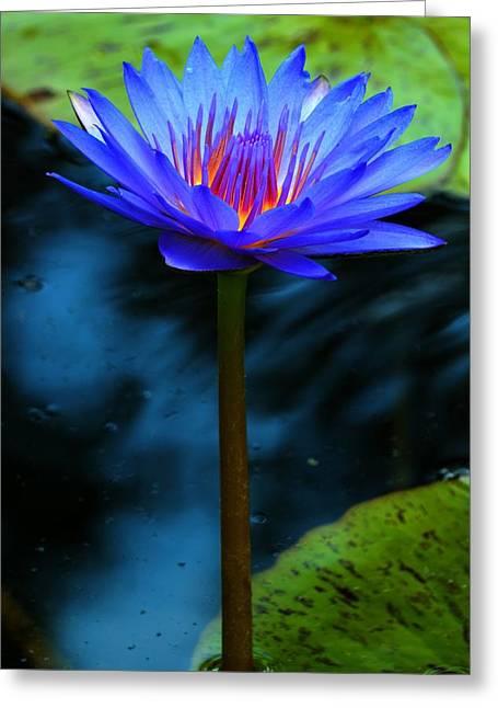 Aquatic Greeting Cards - Blue Fuchsia Water Lily Greeting Card by Carol R Montoya