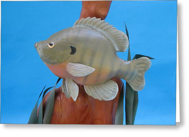 Lake Sculptures Greeting Cards - Blue Gill Greeting Card by Jack Murphy
