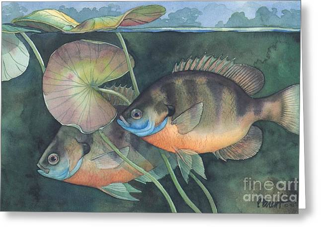 Blue Gill Greeting Card by Paul Brent