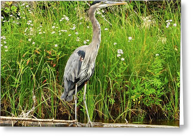 Tetons Greeting Cards - Blue Heron Greeting Card by Greg Norrell