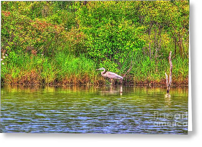 Reds Of Autumn Mixed Media Greeting Cards - Blue Heron-In the swamp-20 Greeting Card by Robert Pearson
