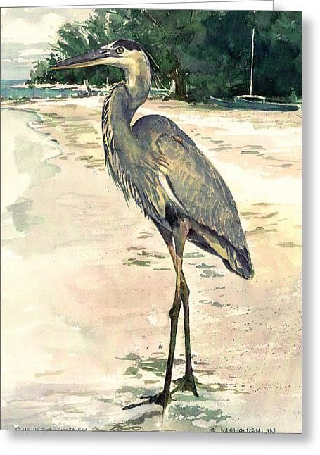 Siesta Key Greeting Cards - Blue Heron on Shell Beach Greeting Card by Shawn McLoughlin