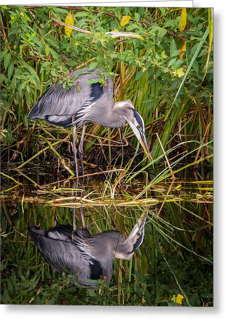 Saw Greeting Cards - Blue heron Greeting Card by Zina Stromberg