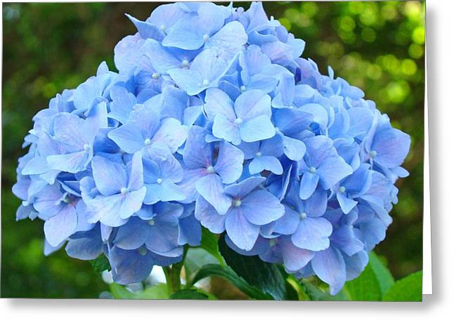 Baslee Troutman Greeting Cards - Blue Hydrangea Floral art Print Hydrangeas Flowers Baslee Troutman Greeting Card by Baslee Troutman