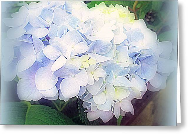 Greeting Cards - Blue Hydrangea Greeting Card by Kay Novy