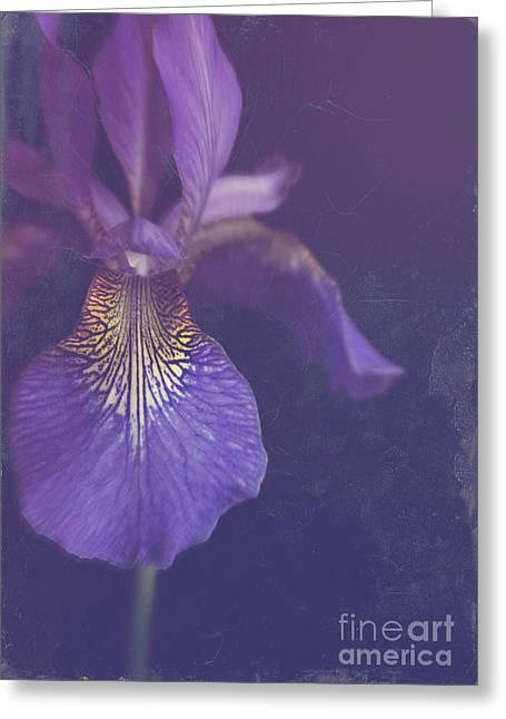 Interior Still Life Greeting Cards - Blue Iris Greeting Card by Lyn Randle