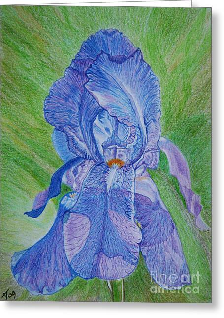 Spring Bulbs Drawings Greeting Cards - Blue Iris Greeting Card by Yvonne Johnstone