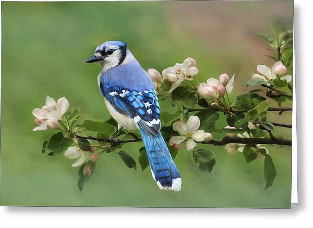 Blue Jay And Blossoms Greeting Card by Lori Deiter
