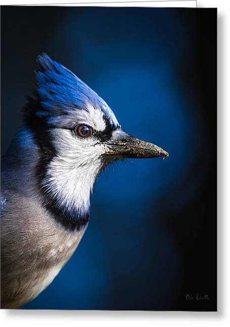 Blue Jay Greeting Card by Bob Orsillo
