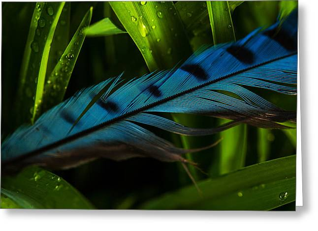 Blue And Green Greeting Cards - Blue Jay Feather Greeting Card by Karol  Livote