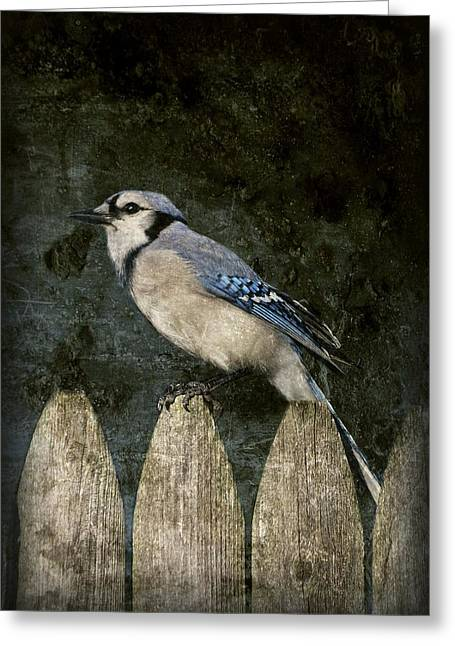 Blue Jay Picture Greeting Cards - Blue Jay On The Fence Greeting Card by Angie Tirado