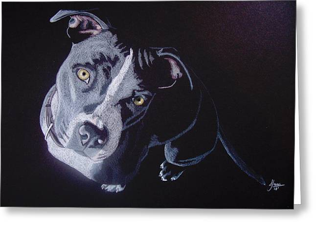 Dog Pencil Greeting Cards - Blue Light Greeting Card by Stacey Jasmin