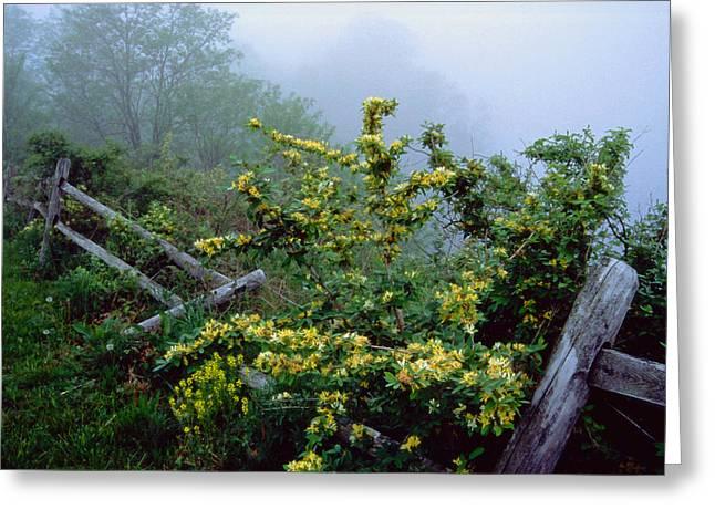 Flowering Bush Greeting Cards - Blue Marsh fog 003 Greeting Card by Scott McAllister