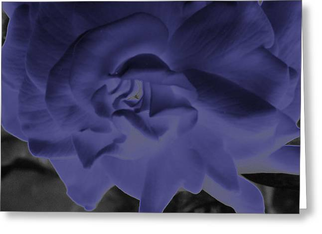 Indiana Flowers Greeting Cards - Blue Melody Gardenia Greeting Card by Tina M Wenger