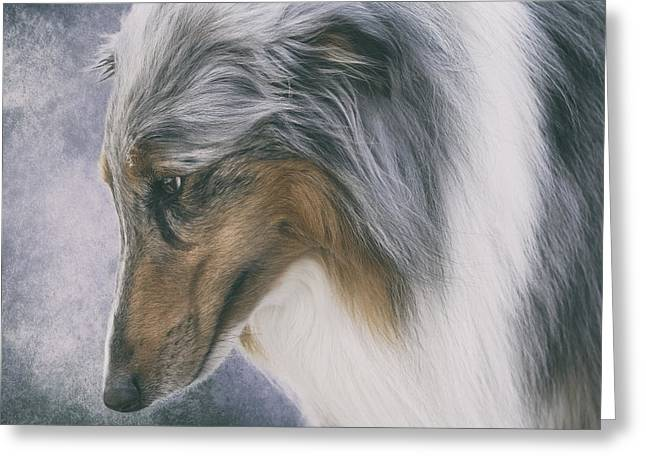 Working Dog Greeting Cards - Blue Merle Rough Collie Greeting Card by Wolf Shadow  Photography