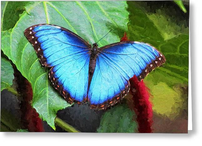 Tn Greeting Cards - Blue Morpho Butterfly - Cockrell Butterfly Center - Huston Greeting Card by TN Fairey