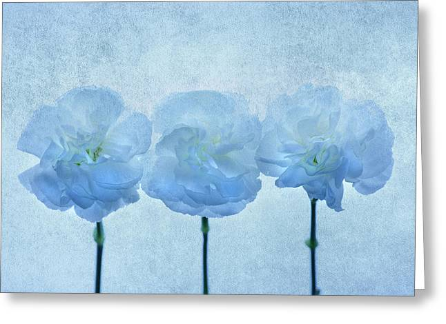 Carnation Greeting Cards - Blue on Blue Greeting Card by Rebecca Cozart