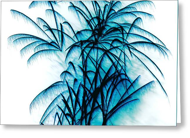 Pyrotechnics Greeting Cards - Blue Palm Fireworks by Kaye Menner Greeting Card by Kaye Menner