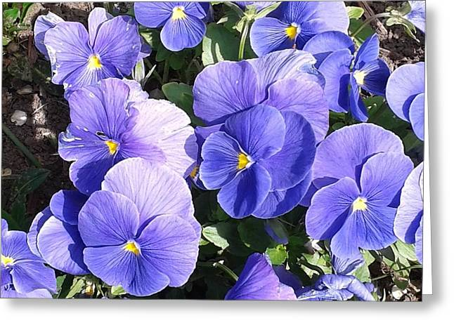 Botanical Greeting Cards - Blue Pansies Greeting Card by Milagros Phillips