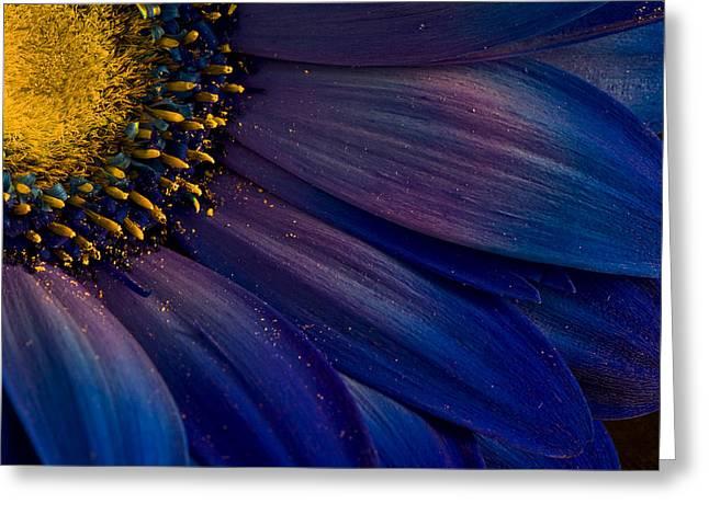 Flower Macro Greeting Cards - Blue Rays Greeting Card by Thorsteinn H. Ingibergsson