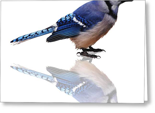 Jaybird Greeting Cards - Blue Reflections Greeting Card by DiDi Higginbotham
