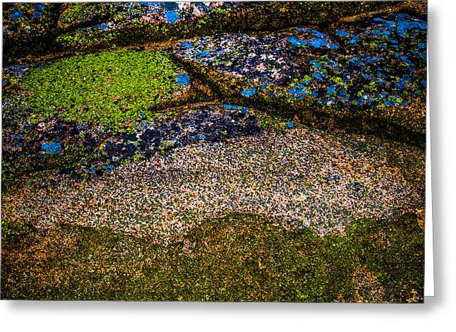 Plankton Greeting Cards - Blue Rock Greeting Card by Mark Beecher