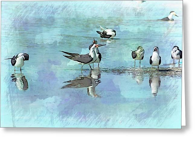 Tern Greeting Cards - Blue Royalty Greeting Card by Sherry Snyder