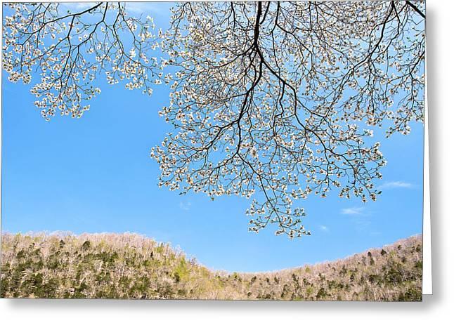Tamyra Ayles Greeting Cards - Blue Skies and Dogwood Greeting Card by Tamyra Ayles