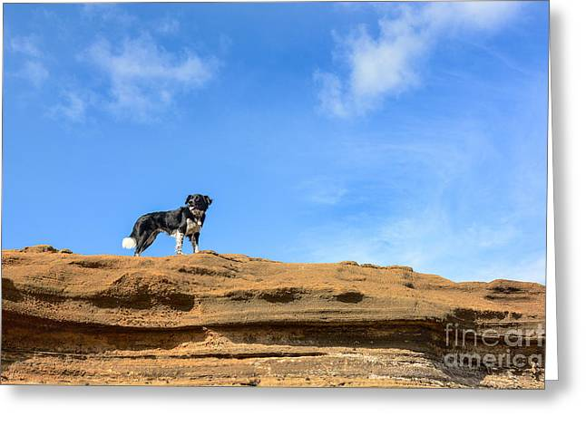 Doggies Greeting Cards - Blue Sky Border Greeting Card by Kristin Lam