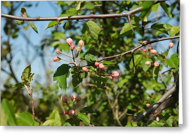 Best Sellers -  - Wild Orchards Greeting Cards - Blue sky pink blossoms Greeting Card by LeeAnn McLaneGoetz McLaneGoetzStudioLLCcom