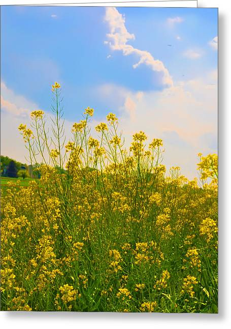 Erdenheim Farm Greeting Cards - Blue Sky Yellow Flowers Greeting Card by Bill Cannon