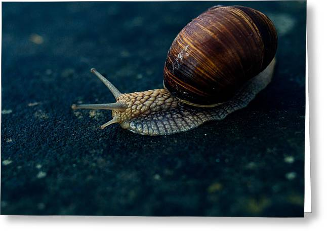 Blue Snail Greeting Card by Pati Photography
