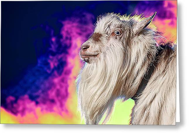 Goat Photographs Greeting Cards - Blue The Goat In Fog Greeting Card by TC Morgan