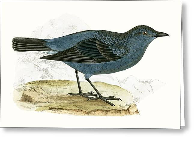 Blue Thrush Greeting Card by English School