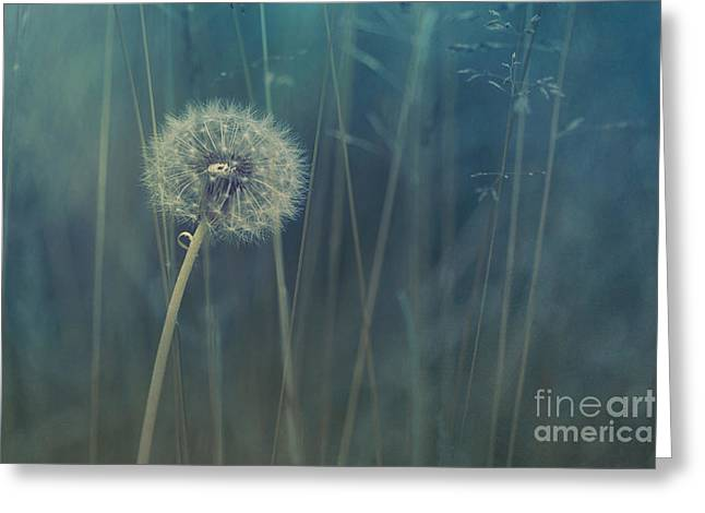 Meadow Photographs Greeting Cards - Blue Tinted Greeting Card by Priska Wettstein