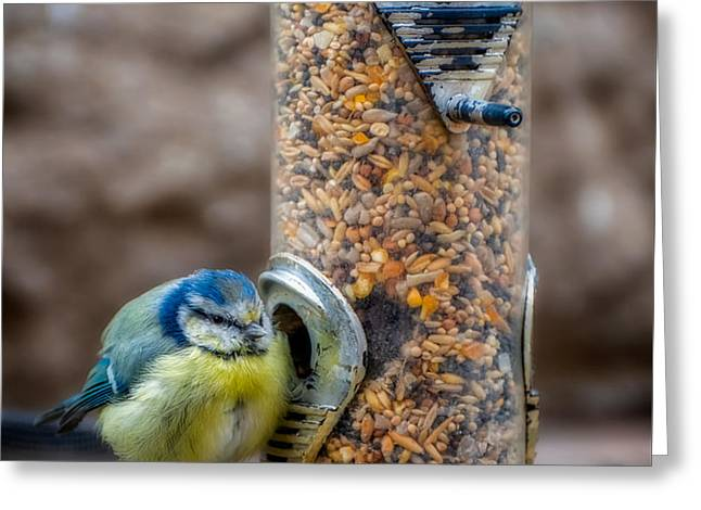Blue Tit Greeting Card by Adrian Evans