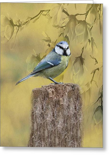 Blue Tit Bird II Greeting Card by Movie Poster Prints