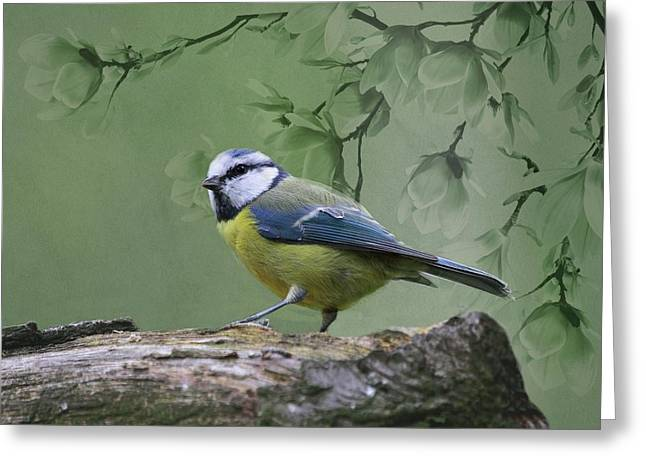Blue Tit Bird Greeting Card by Movie Poster Prints