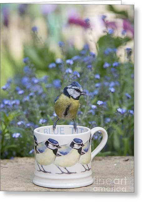 Blue Tit Mug Greeting Card by Tim Gainey