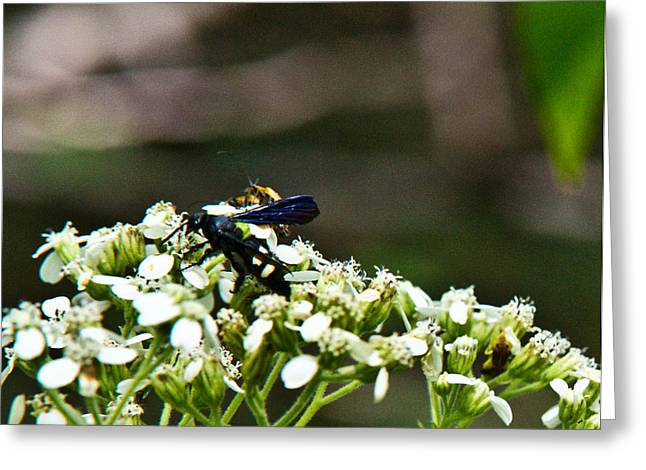 Lawrence County Greeting Cards - Blue Wasp 2 Greeting Card by Douglas Barnett