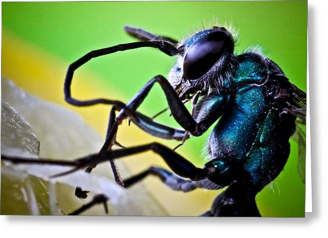 Macro Pro Photographs Greeting Cards - Blue Wasp On Fruit Greeting Card by Ryan Kelly