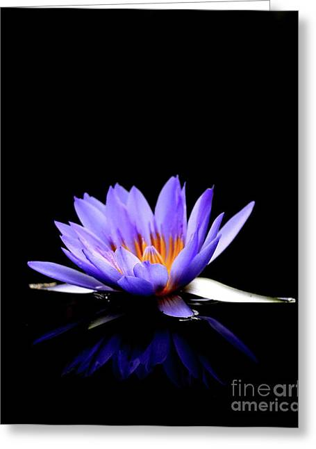 Blue Water Lily . 7d5714 Greeting Card by Wingsdomain Art and Photography