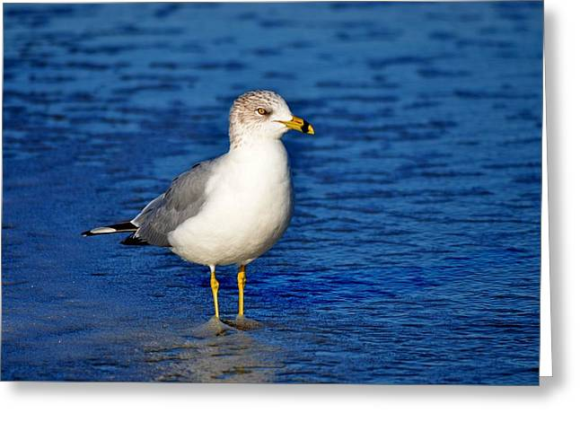 Flying Seagull Greeting Cards - Blue Water Greeting Card by Russell Bonovitch