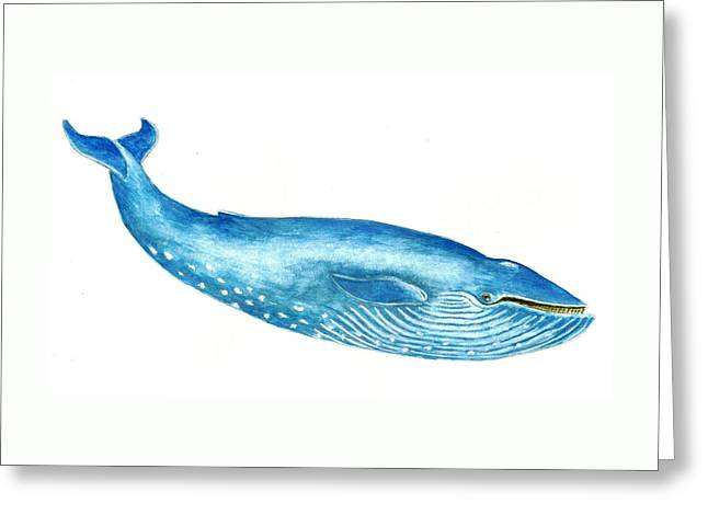 Blue Whale Greeting Card by Michael Vigliotti