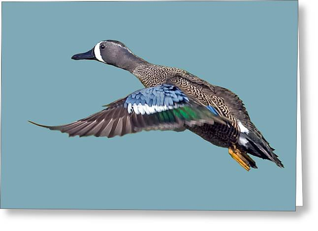 Blue Wings Greeting Cards - Blue-winged Teal Greeting Card by Larry Linton
